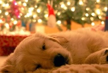 Pets Love The Holidays Too!