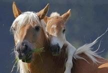 Les chevaux / by Fleurs d'avenir