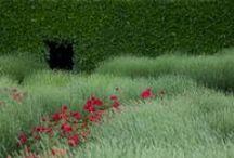 Garden / by Elvi