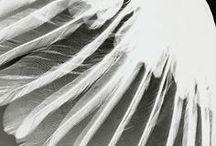 Winged! / by Elvi