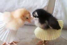 Chick- Chick- Chickens / by Renee Gonzalez Broz