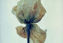 Floral / by Elvi