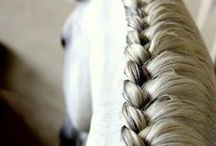Horse manes and tails / Horse hair is beautiful. Every tailhair is an inspiration for me...