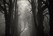 Foggy & Misty