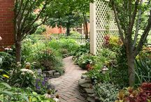 Gardening / Gardening plants food organic / by Jenny Anderson