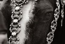 Decorated horses / Decorated horses from all over the world. They need their jewellery, too.