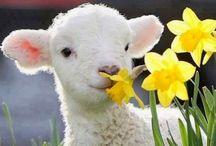 ♡ Spring.