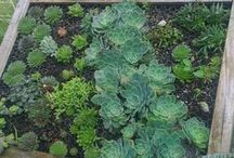 Gardens & Flora to love.