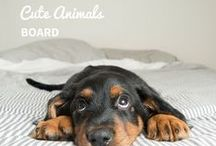Cute Animals / For all those animals who capture our hearts and bring smiles to our faces!
