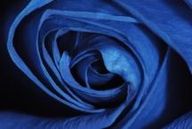 Bluer than blue / by Anna Marie