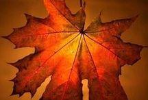 Fall !! / by Anna Marie