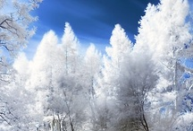 winter! / by Anna Marie