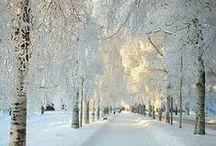 Winter / by Amanda Swift