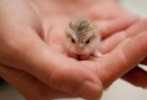 Teddy pins cute animals / by Inge Borg