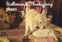 Halloween and Thanksgiving / Dressing up is fun! But we want to play safe during the fall holidays, and we want both our holiday guests and our pets to get maximum enjoyment from the festivities.  / by petMD.com