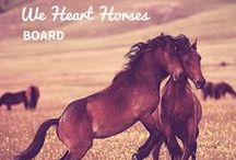 We Heart Horses / by petMD.com