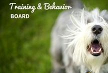 Behavior and Training / One of the most important parts of life is proper socializing and training of your pet, and we have some of the best experts to guide you.  / by petMD.com