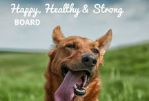 Happy, Healthy, and Strong / Keeping your pets healthy is a lifetime project. That's why we have some of the best experts in the field of animal medicine and behavior.