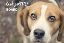 #ASKpetMD / Whenever our pets are ailing we want to help them in anyway we can... But sometimes we don´t know how!  Take a look at real questions asked by real people and answered by Vets! / by petMD.com