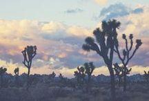 Desert Dreams / Desert dreams and cactus cooler!