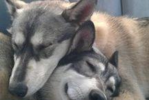 Pawsitive Pets Pics http://momndaughtersavings.com/pawsitive-pet-pics/ / pets