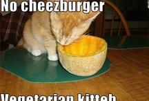 Vegetarian Kitteh