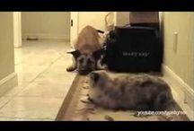 Puppy Videos / pet videos