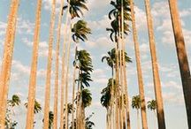 California Dreamin' / What we love about living in the Golden State: from sunshine to Silver Lake.