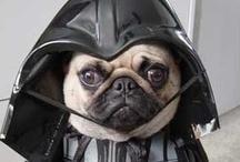 Disfraces de perros y gatos. / Nuestras mascotas y sus peculiares disfraces. Fotos que conseguimos online y compartimos con ustedes.