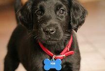Placas y sus Mascotas / Placas para perros y gatos en diferentes modelos y estilos. Tenemos una amplia variedad de diseños. También ofrecemos placas con código QR que te permiten colocar mayor información acerca de tu mascota. Accesorios Online! www.pinpet.com