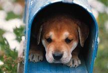 Fotos de nuestras mascotas. / Fotos en la web de nuestros perros y gatos. Espectaculares!