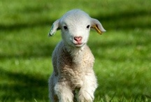 For you were like sheep going astray, but now you have returned to the Shepherd and Overseer of your souls. 1 Peter 2:25 / Lambs, sheep, the Good Shepard, Mary had a little lamb / by Katherine Gruender