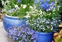 Container gardening / by Elisabetta Pozzetti