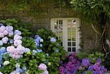 English Country Gardens / The beautiful countryside and wonderful English gardens