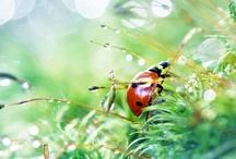 Lady bug fly away home~for A / For the love of lady bugs and my daughter <3 / by Katherine Gruender