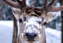 Animals / Beautiful pics of beautiful animals.