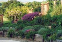 Garden Ideas / by Nancy Leonard Everett