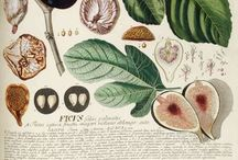 Botany & Watercolour / Nice sciencey things