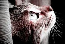 Cats/Kittens / by Pyper Trisler