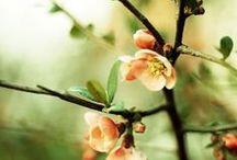 SEASON ✭ Spring ✚ Easter