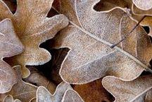 SEASON ✭ Autumn / Fall