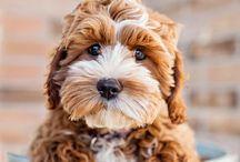 Pup / by Amy Schoettker