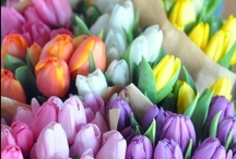 Tulip and friends / by Pernille Madsen