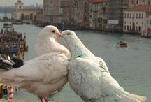 Doves / by Suzanne Carter