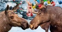 Moosletoe / Alaska's matchmaking moose, Bullwinkle, has his sights set on a most unlikely pair. Holly Noelle Snow loves Christmas so much she could be one of Santa's elves, and Reese Sutton might as well be Scrooge. But there is no way BW will allow these two to ruin his perfect track record. Even if he has to bind them together with Christmas lights.