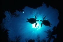 underwater life / by Lois Rendon