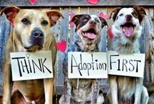 Adopt A Pet / Pet adoption is worth the rescue.