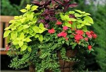 Container Gardening.... / by Jen Cooper