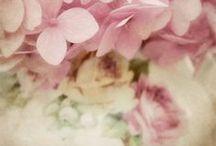Color Inspiration - Pink&Purple