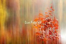 Color Inspiration - Red & Orange